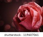 Beautiful Pink Rose On Dark...