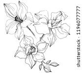 vector orchid flower. floral... | Shutterstock .eps vector #1196077777