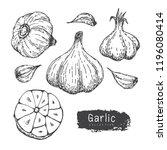 garlic collection  hand draw...   Shutterstock .eps vector #1196080414