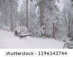 broken tree in the forest ... | Shutterstock . vector #1196143744
