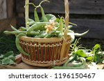 Green Beans In A Basket.