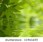 Green Leaves Reflecting In The...