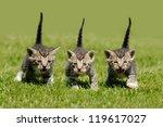 Stock photo three kitten 119617027
