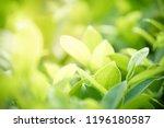 closeup nature view of green...   Shutterstock . vector #1196180587