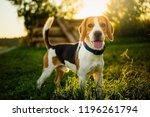 Dog Portrait Back Lit...