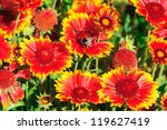 Red Yellow Flowers With A...