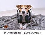 adorable jack russell dog lies... | Shutterstock . vector #1196309884
