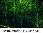 the surface of green leaves.... | Shutterstock . vector #1196345731