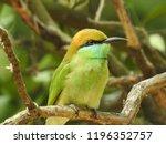 the nature beautiful birds | Shutterstock . vector #1196352757