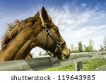 head of an horse in a farm by... | Shutterstock . vector #119643985
