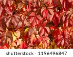 background of colorful bright... | Shutterstock . vector #1196496847