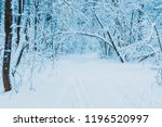 winter forest with snow and... | Shutterstock . vector #1196520997