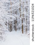 winter forest with snow and... | Shutterstock . vector #1196521024