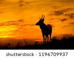 deer stands on the hill at dusk. | Shutterstock . vector #1196709937
