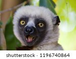 surprised face of white headed... | Shutterstock . vector #1196740864