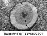iron wedge splits wood trunk... | Shutterstock . vector #1196802904