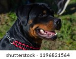 cute dog rottweiler in the park ... | Shutterstock . vector #1196821564