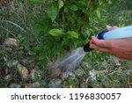 girl watering lemon plant | Shutterstock . vector #1196830057