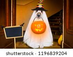 dog sitting as a ghost for... | Shutterstock . vector #1196839204