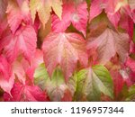 autumn leaves in the park | Shutterstock . vector #1196957344