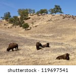 Buffalo Herd Spotted On Route...