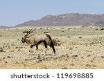 oryx walks through the steppe... | Shutterstock . vector #119698885