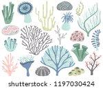 Aquarium Corals And Seaweed....
