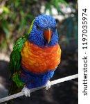 parrot avian bright | Shutterstock . vector #1197035974