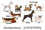 cute cartoon dogs set. poodle ... | Shutterstock .eps vector #1197079591
