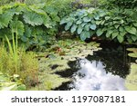 a lush and green garden pond... | Shutterstock . vector #1197087181
