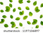 fresh mint leaves on white... | Shutterstock . vector #1197106897