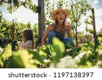 beautiful young female farmer... | Shutterstock . vector #1197138397
