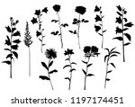 set of silhouettes of flowers... | Shutterstock .eps vector #1197174451