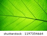 leaf texture pattern for spring ... | Shutterstock . vector #1197354664
