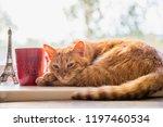 Autumn Red Cat Lies With A Mug...