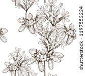 seamless pattern of wild herbal ... | Shutterstock .eps vector #1197553234