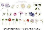 flowers and leaves  watercolor  ... | Shutterstock . vector #1197567157