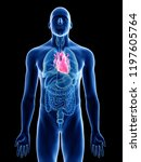 3d rendered medically accurate...   Shutterstock . vector #1197605764