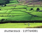 Yorkshire Dales Hillside With ...