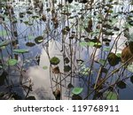 Faded Lotus Pond In Autumn