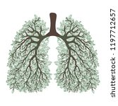 human lungs. respiratory system....   Shutterstock .eps vector #1197712657