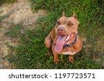 smile pit ball   Shutterstock . vector #1197723571