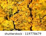 Closeup Of A Yellow Mushroom O...