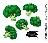 broccoli hand drawn vector set. ... | Shutterstock .eps vector #1197789397