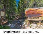 Roosevelt National Forest Hike...
