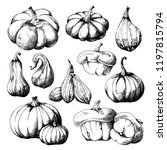 set of pumpkins  big and small... | Shutterstock .eps vector #1197815794