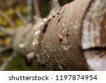 wood autumn blurred background. ...   Shutterstock . vector #1197874954