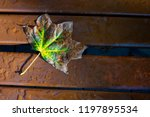 autumn leaf with water drop on... | Shutterstock . vector #1197895534