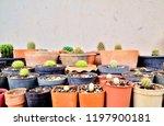 a wide view of various species  ... | Shutterstock . vector #1197900181