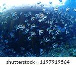 underwater world with many... | Shutterstock . vector #1197919564